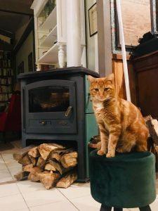 le chat de la maison d'hôtes
